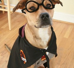 Harry Potter Dog Costume-11