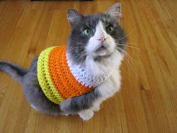 Pet Candy Corn Sweater Creative Pet Projects